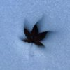 Get Checked For Melanoma In The Winter