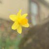 yellow flower and seasonal allergies